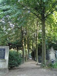 Mittig ein erdiger Weg, links und rechts hohe Bäume und Grabsteine.